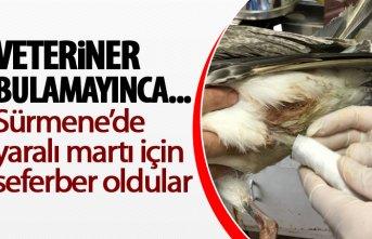 Trabzon'da yaralı bulunan martıyı onlar iyileştirdi