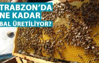 Trabzon'da ne kadar bal üretiliyor?