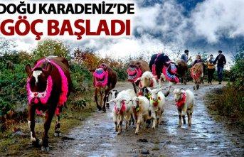 Doğu Karadeniz'de göç başladı