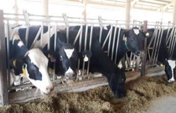 """Kendirlioğlu; """"Süt fiyatları arasındaki dengesizliğe..."""