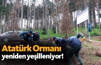 Atatürk Köşkü Ormanı yeniden yeşilleniyor
