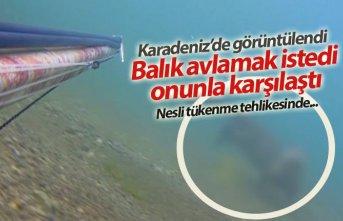 Karadeniz'de görüntülendi! Balık avlamak istedi onunla karşılaştı