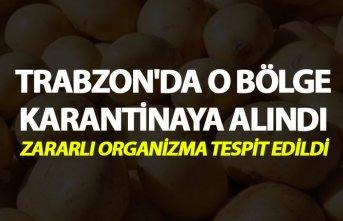 Trabzon'da o bölge karantina altına alındı - Zararlı organizma tespit edildi