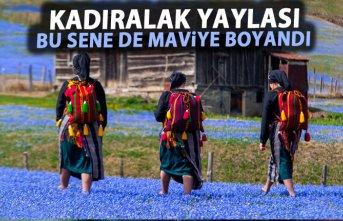 Mavi Yıldız Çiçekleri açtı