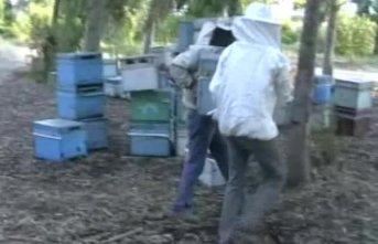 Arılara geçiş üstünlüğü!