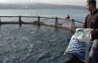 Türkyie'de avlanan balık miktarı azaldı