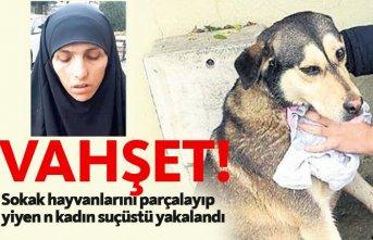 Sokak hayvanlarını parçalayıp yiyen kadın suçüstü yakalandı!