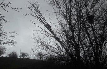 Ağaçta mahsur kalan yavru ayıyı köylüler kurtardı
