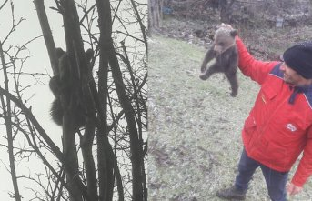 Yavru ayının yardımına vatandaşlar koştu