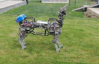 Dört ayaklı yerli ve milli robot 'ARAT' araziye...