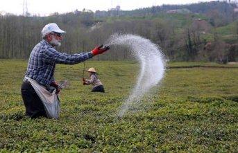Çay üreticisi artan gübre fiyatlarından şikayetçi