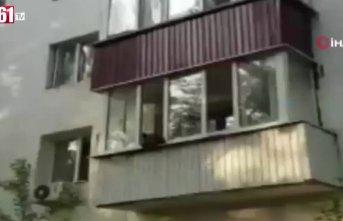 Yavru ayı balkona çıkarsa...
