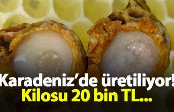 Karadeniz'de üretiliyor! Kilosu 20 bin TL