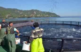 Rusya ve Japonya'ya somon balığı
