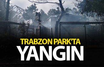 İstanbul Trabzon Park'ta yangın