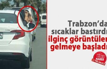 Trabzon'da sıcaklar bastırdı, ilginç görüntüler...