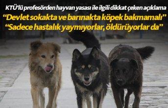 Trabzon'dan sokak köpekleriyle ilgili dikkat çeken açıklama