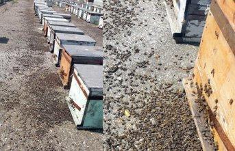 Samsun'da toplu arı ölümleri