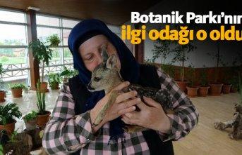 Trabzon'da Botanik Park'ta yavru karaca...