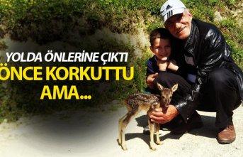 Trabzon'da minik ceylan önce korkuttu ama...