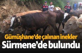 Gümüşhane'de çalınan inekler Sürmene'de bulundu