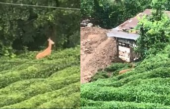 Karaca çay bahçesinde görüntülendi