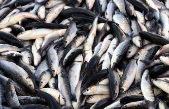 Balık üreticilerine iki önemli destek