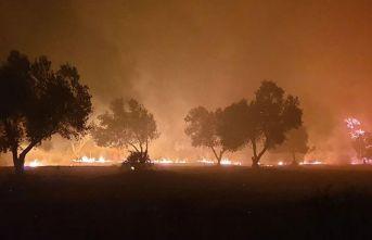 Çanakkale'de orman yangını - Kontrol altına alındı