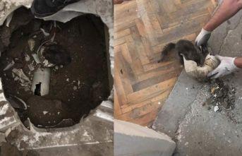 Kedi tuvalete sıkıştı, imdada itfaiye yetişti