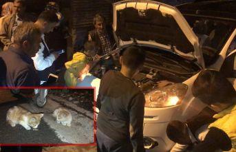 Araç motoruna giren iki kedi 4 saatte kurtarıldı