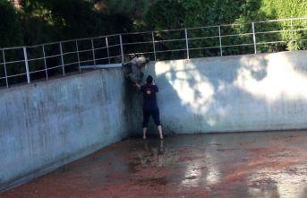 Sulama havuzuna düşen köpeği itfaiye kurtardı