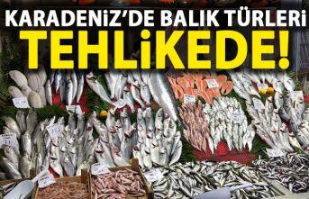 Karadeniz'de balık türleri tehlikede!