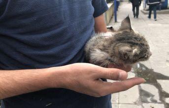 Araç motoruna giren yavru kedi kurtarıldı