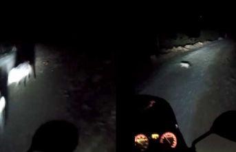 Domuzlar yola atladı, motosiklete çarptı