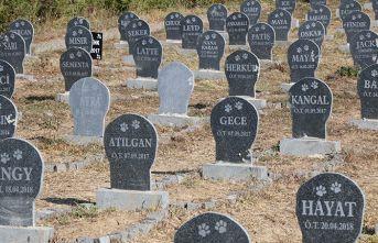 Samsun'da hayvan mezarlığı!
