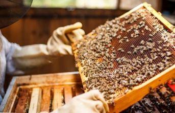 Arı yetiştiricilerinde destekleme sevinci