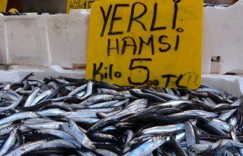 Hamsi 5 liraya düştü, vatandaşlar balıkçılara...