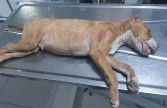 Tartıştığı gençlerin köpeğini bıçaklayarak öldürdü