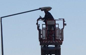 Sokak lambasına takılan güvercini itfaiye kurtardı