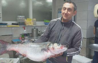 Bu balığı almak için 100 kilo fındık satmak lazım!
