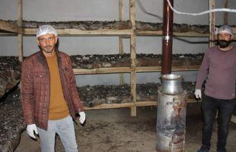 Mantar tesisi kurdu, ilk hasatta yarım tonu buldu