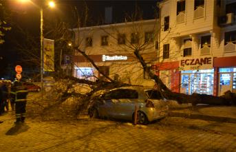 Dev ağaç otomobilin üzerine devrildi