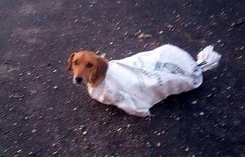 Çuval içindeki gebe köpeği minik Arif'in dikkati kurtardı