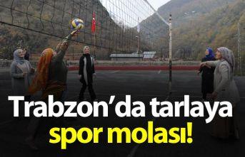 Trabzon'da tarlaya spor molası