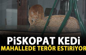Piskopat kedi mahallede terör estiriyor
