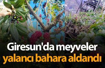 Giresun'da meyveler yalancı bahara aldandı