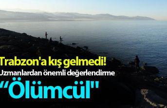 Trabzon'a kış gelmedi! Uzmanlardan önemli...