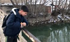 Misafir ördekleri vatandaşlar besliyor