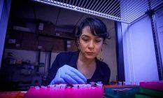 Türk bilim insanı Betül Kaçar, NASA'da!