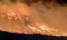 6 saatlik orman yangını! 20 hektar alan kül oldu